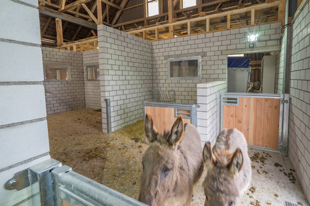 Esel Stall